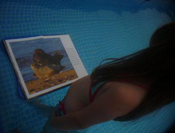 Des phoques dans ma piscine