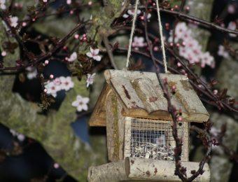 Le lever du printemps
