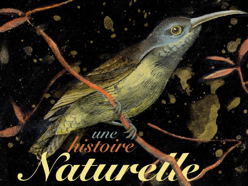 Visuel officiel Une histoire naturelle, résidence d'écriture 2019 à MOntauban avec Cécile Gambini