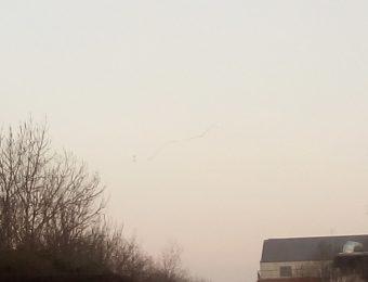 Oiseau en migration
