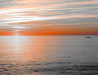 Flamboyant Océan de Printemps