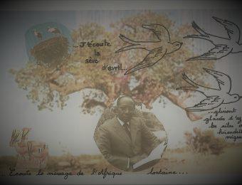 La généalogie du Baobab
