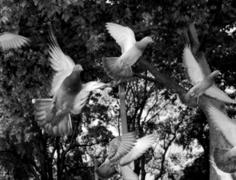 Mahmoud Darwich, J'ai derrière le ciel un ciel (poème 29)