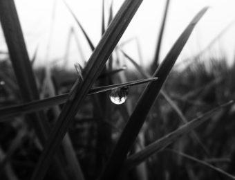Denise Desautels, L'angle noir de la joie (poème 20)