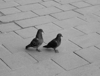 aNNe herbauts, Je ne suis pas un oiseau (poème 33)